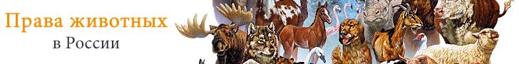 Защита прав животных в россии вот содержание