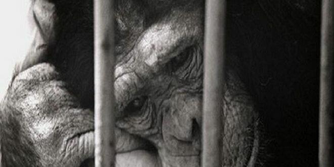 Требуйте запрета на въезд в ваш город передвижных зоопарков, цирков и дельфинариев!