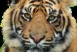 Ингушетия: Мэр Магаса запретил цирки с животными!