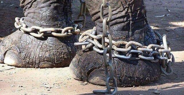 Где уже запрещены цирки с животными